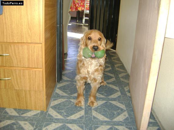 Os presento a mi perro Chizu