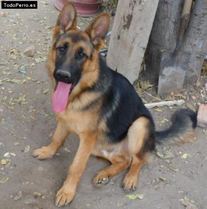La foto del perro