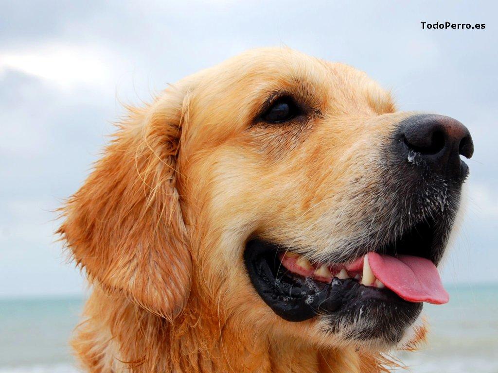 El perro truman un fondo de pantalla 1024x768 for Fondos de pantalla de perritos