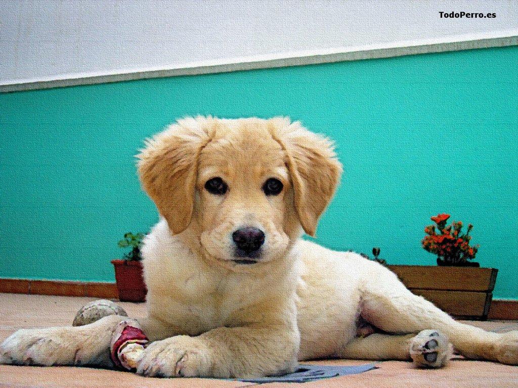 El perro daxter un fondo de pantalla 1024x768 for Fondos de pantalla de perritos