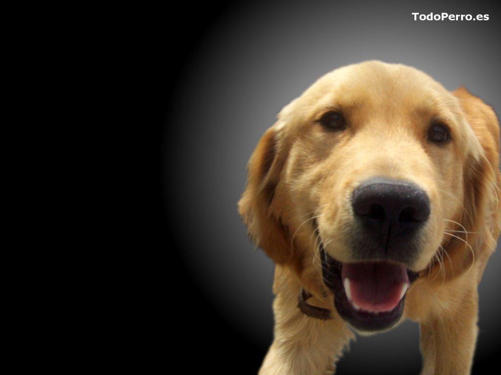 Un fondo del perro toffy 1024x768 for Fondos de pantalla de perritos
