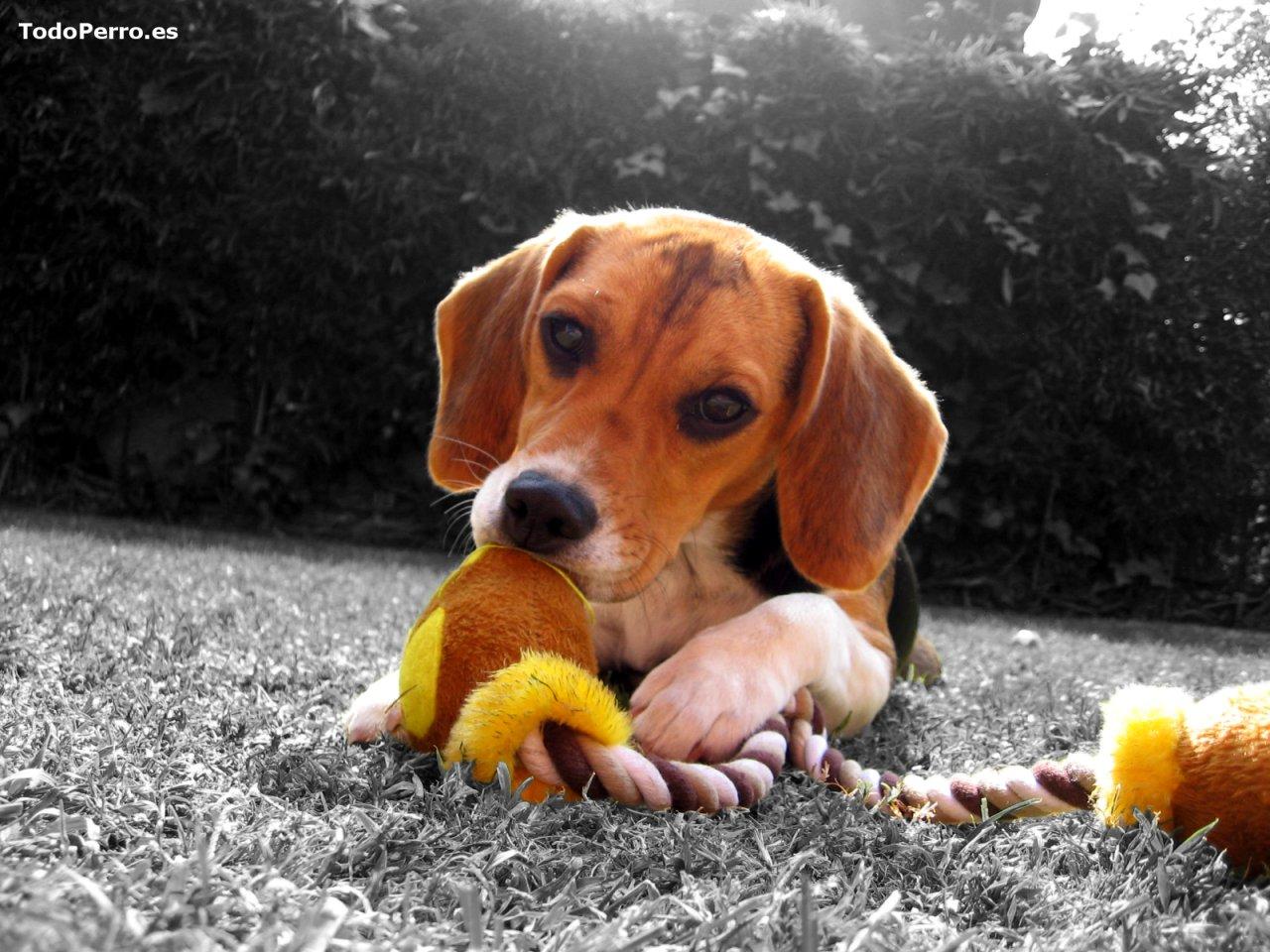 El perro sofia un fondo de escritorio 1024x768 for Imagenes de escritorio