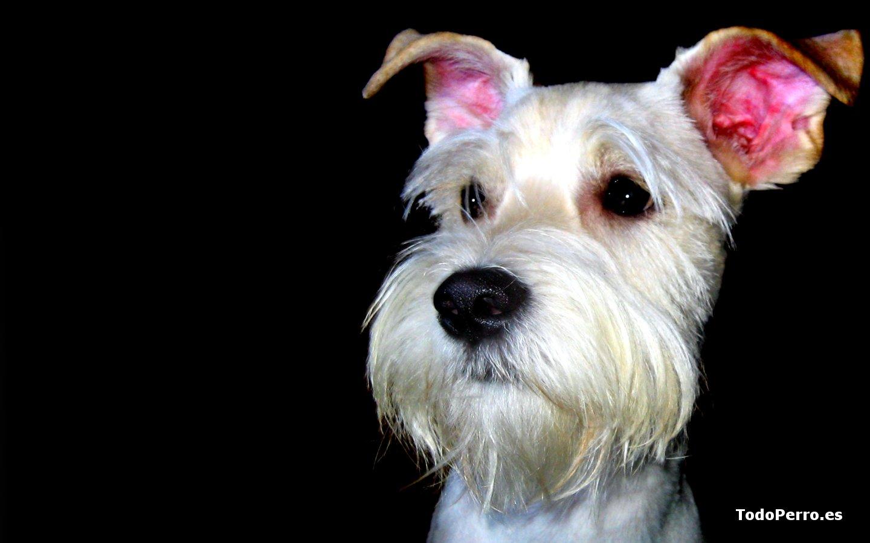 Wallpapers de perros lucas 1440x900 for Fondos de pantalla de perritos